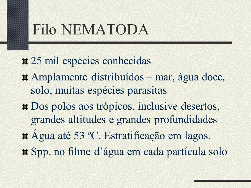 Filo NEMATODA Aforismo de N.A.