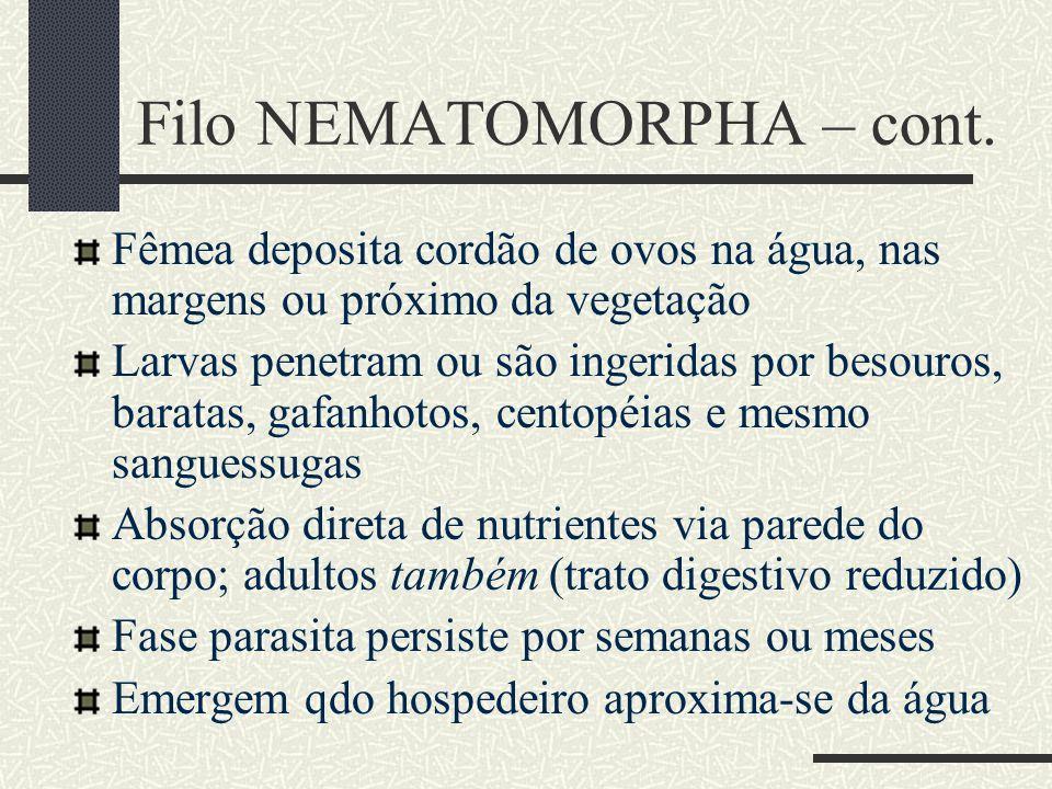 Filo NEMATOMORPHA – cont.