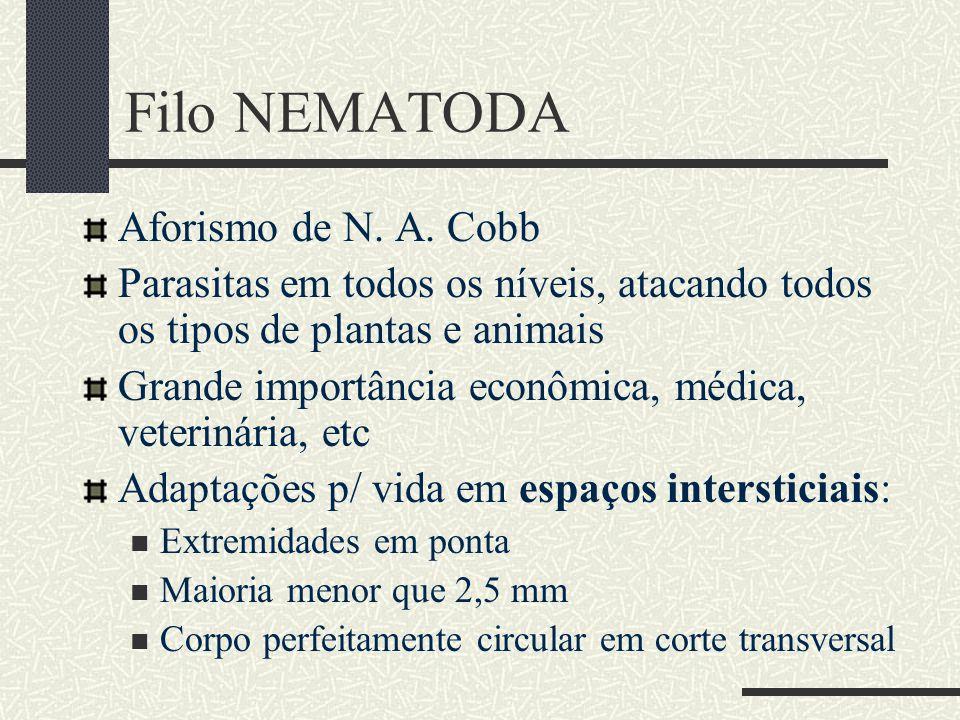 NEMATODA – caracterização Pseudoceloma pouco ou inexistente (porém vasto em formas parasitas como Ascaris) Sustentação do corpo - cutícula Locomoção: ondulações (contrações alternadas musc.