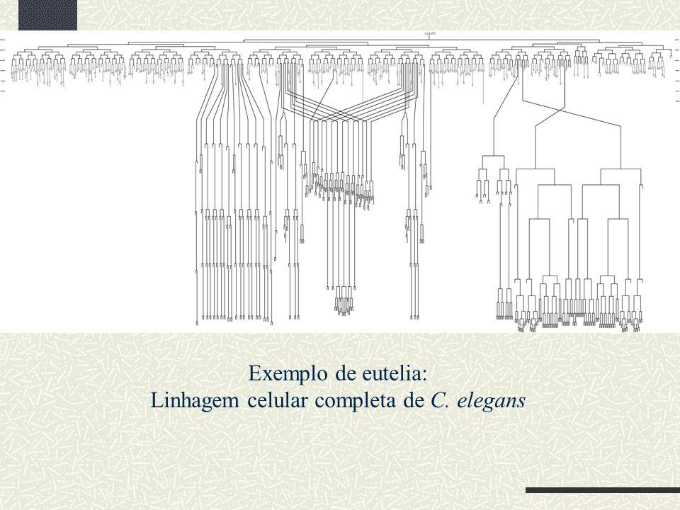 Exemplo de eutelia: Linhagem celular completa de C. elegans
