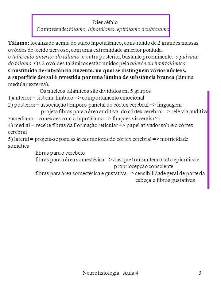 Neurofisiologia Aula 43 Diencéfalo Compreende: tálamo, hipotálamo, epitálamo e subtálamo Tálamo: localizado acima do sulco hipotalâmico, constituído d