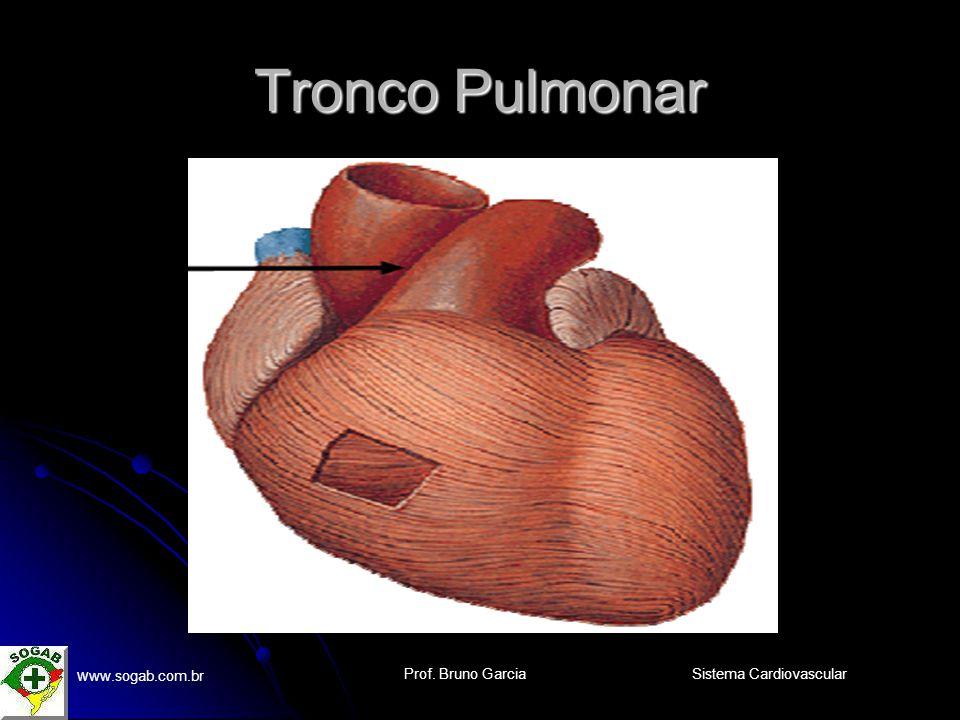 Prof. Bruno Garcia w ww.sogab.com.br Sistema Cardiovascular Tronco Pulmonar