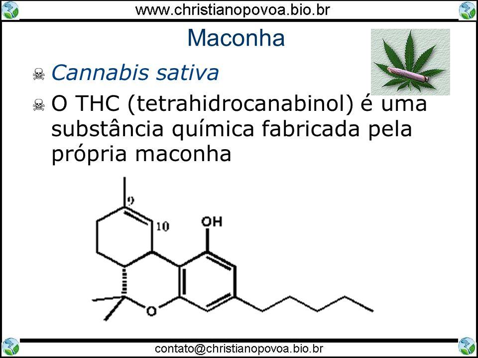 Maconha Cannabis sativa O THC (tetrahidrocanabinol) é uma substância química fabricada pela própria maconha