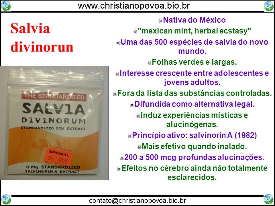 Salvia divinorun Nativa do México