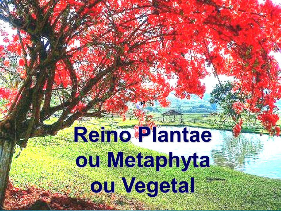 Reino Plantae ou Metaphyta ou Vegetal