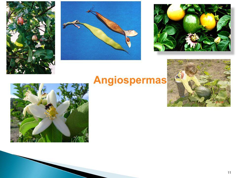 11 Angiospermas