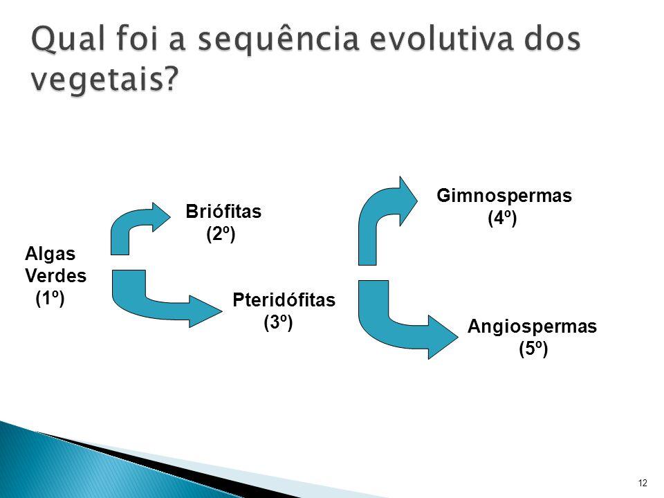 12 Algas Verdes (1º) Briófitas (2º) Pteridófitas (3º) Gimnospermas (4º) Angiospermas (5º)