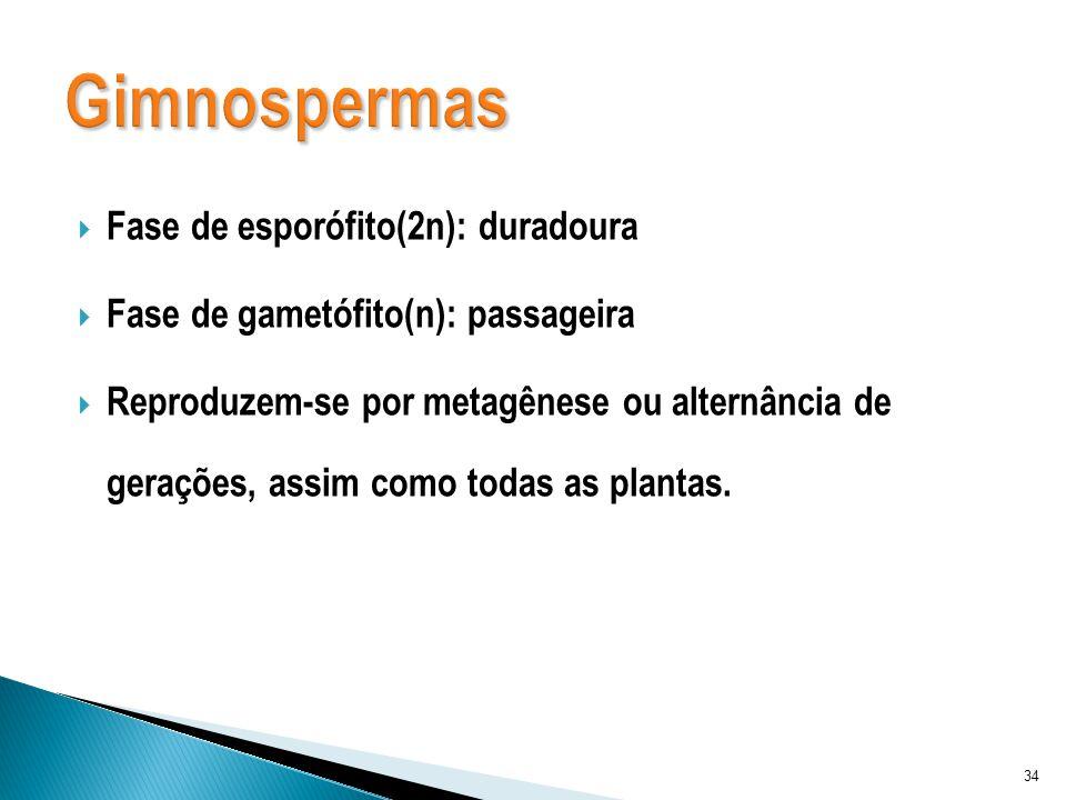Fase de esporófito(2n): duradoura Fase de gametófito(n): passageira Reproduzem-se por metagênese ou alternância de gerações, assim como todas as plant