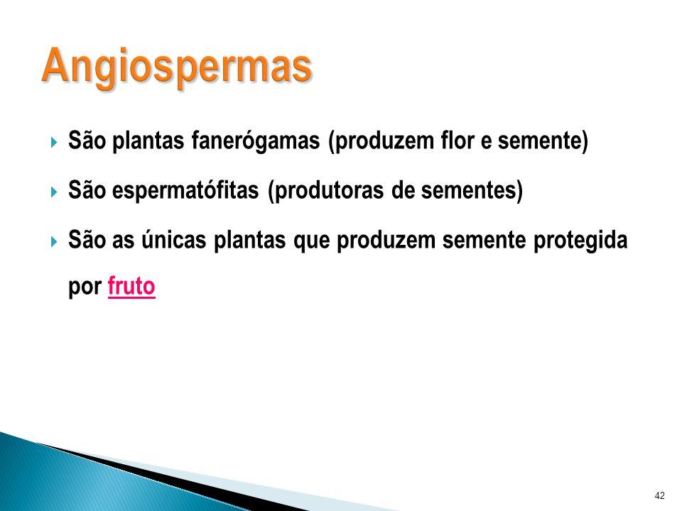 São plantas fanerógamas (produzem flor e semente) São espermatófitas (produtoras de sementes) São as únicas plantas que produzem semente protegida por