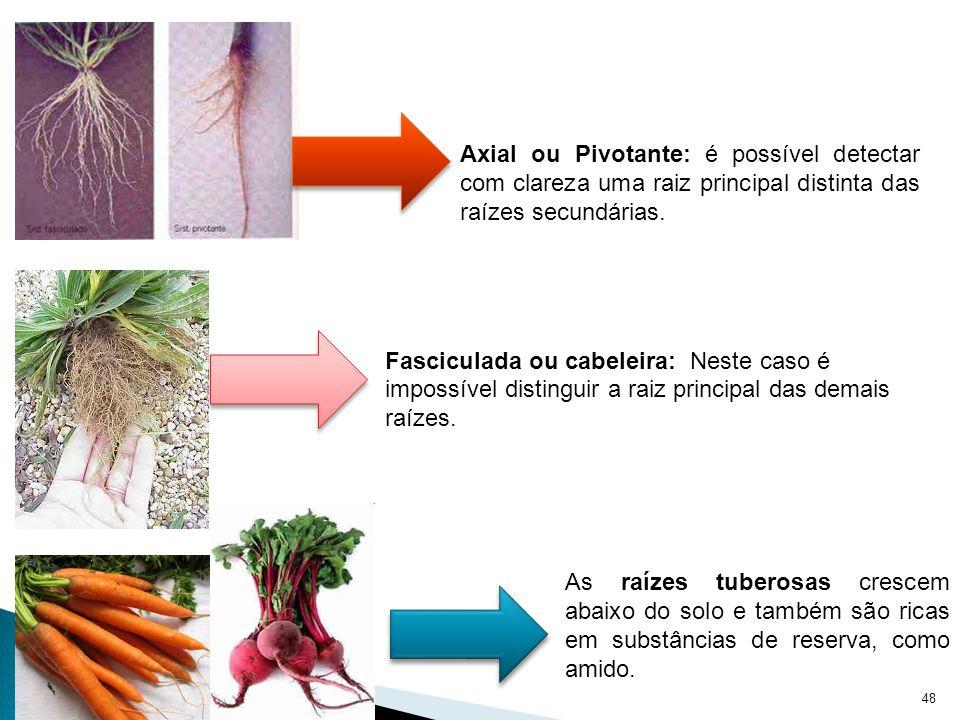 49 Esse tipo de raiz é responsável por auxiliar a respiração do vegetal, como já diz seu nome.