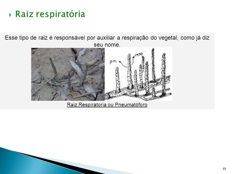 49 Esse tipo de raiz é responsável por auxiliar a respiração do vegetal, como já diz seu nome. Raiz Respiratoria ou Pneumatóforo