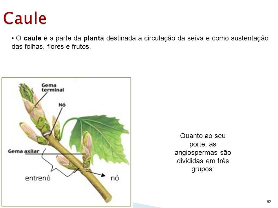 52 O caule é a parte da planta destinada a circulação da seiva e como sustentação das folhas, flores e frutos. Quanto ao seu porte, as angiospermas sã
