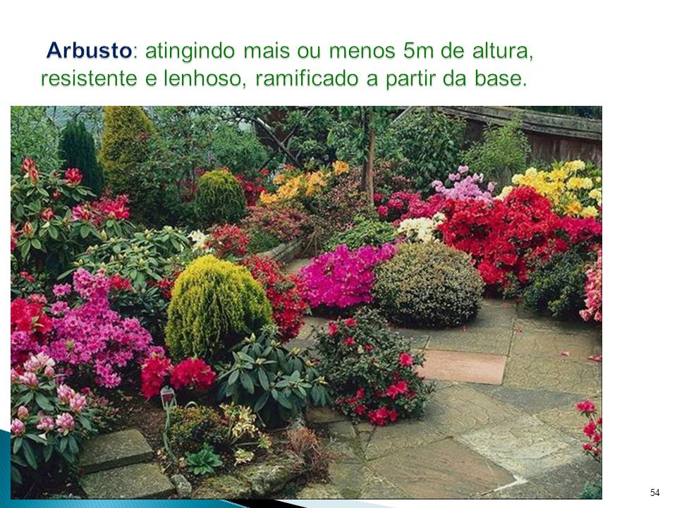 Reino Plantae - Prof. Giseli Trento Andrade e Silva54