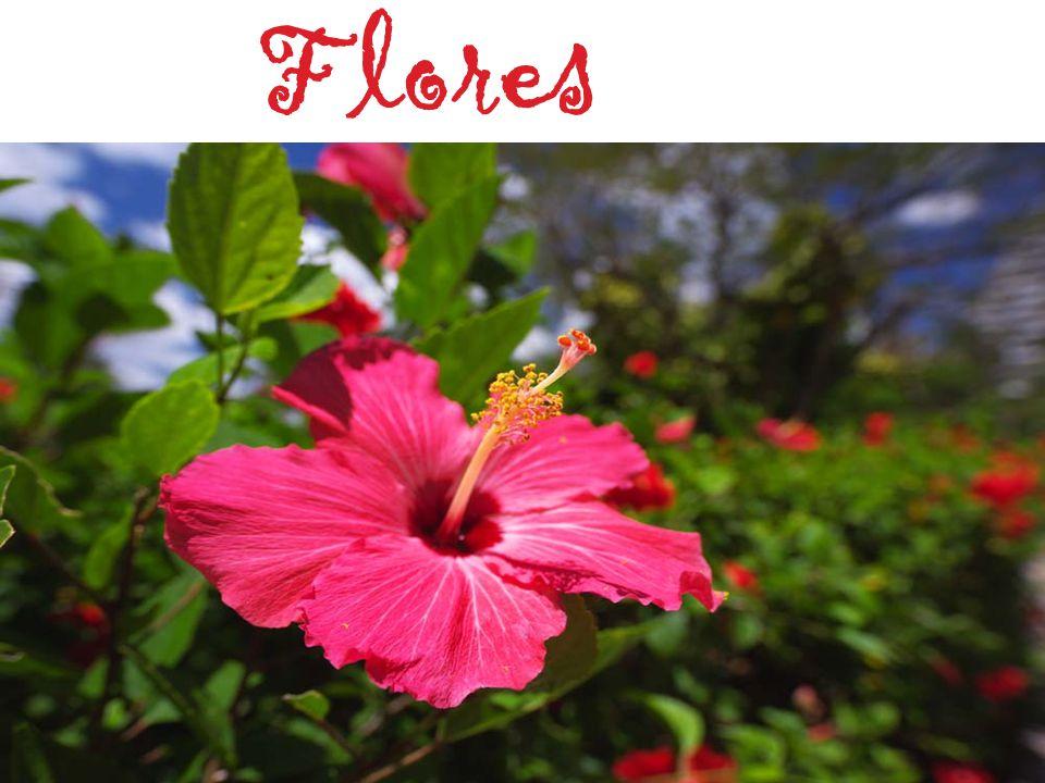65 Função Apesar de contribuírem com a beleza da natureza, principalmente durante a estação da primavera, a existência das flores possui um objetivo reprodutivo: contribuir com a produção de sementes do vegetal.