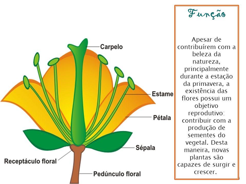 65 Função Apesar de contribuírem com a beleza da natureza, principalmente durante a estação da primavera, a existência das flores possui um objetivo r