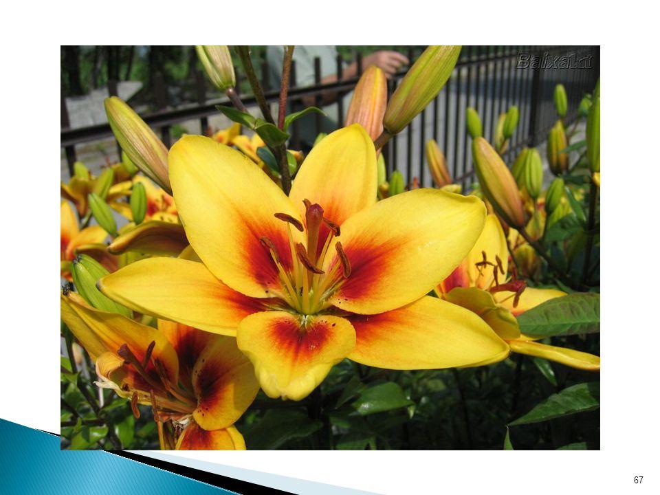 DIRETA: grão de pólen de uma flor entra em contato com o estigma dela mesma INDIRETA: grão de pólen de uma flor entra em contrato com o estigma de outra flor de sua espécie (na mesma planta ou não) 68