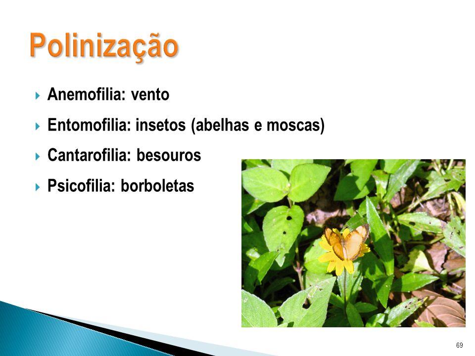 Anemofilia: vento Entomofilia: insetos (abelhas e moscas) Cantarofilia: besouros Psicofilia: borboletas 69