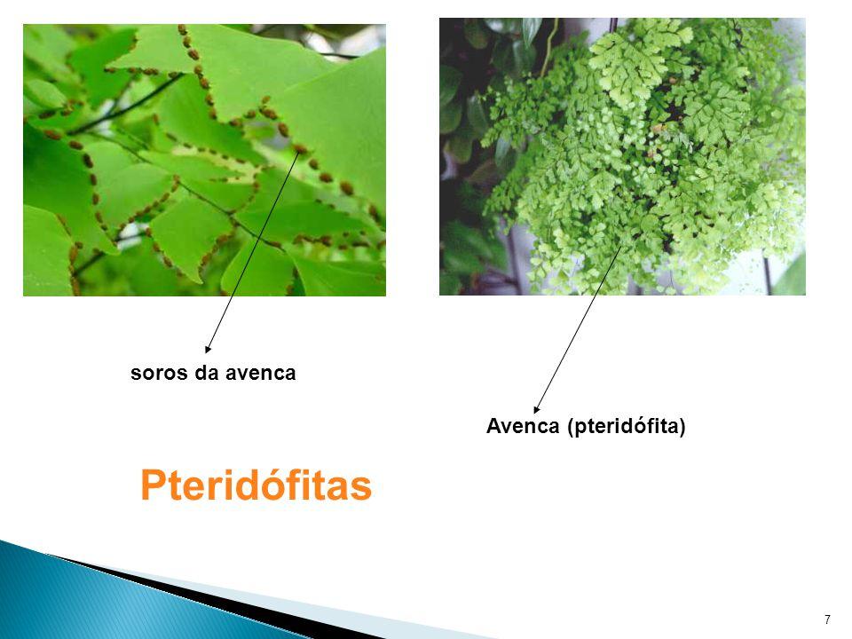 Produzem sementes e flores Gimnospermas: ex: Pinheiro do Paraná Angiospermas: ex: qualquer planta que produz fruto (ex: mangueira, cajueiro, laranjeira, abacateiro...) 8