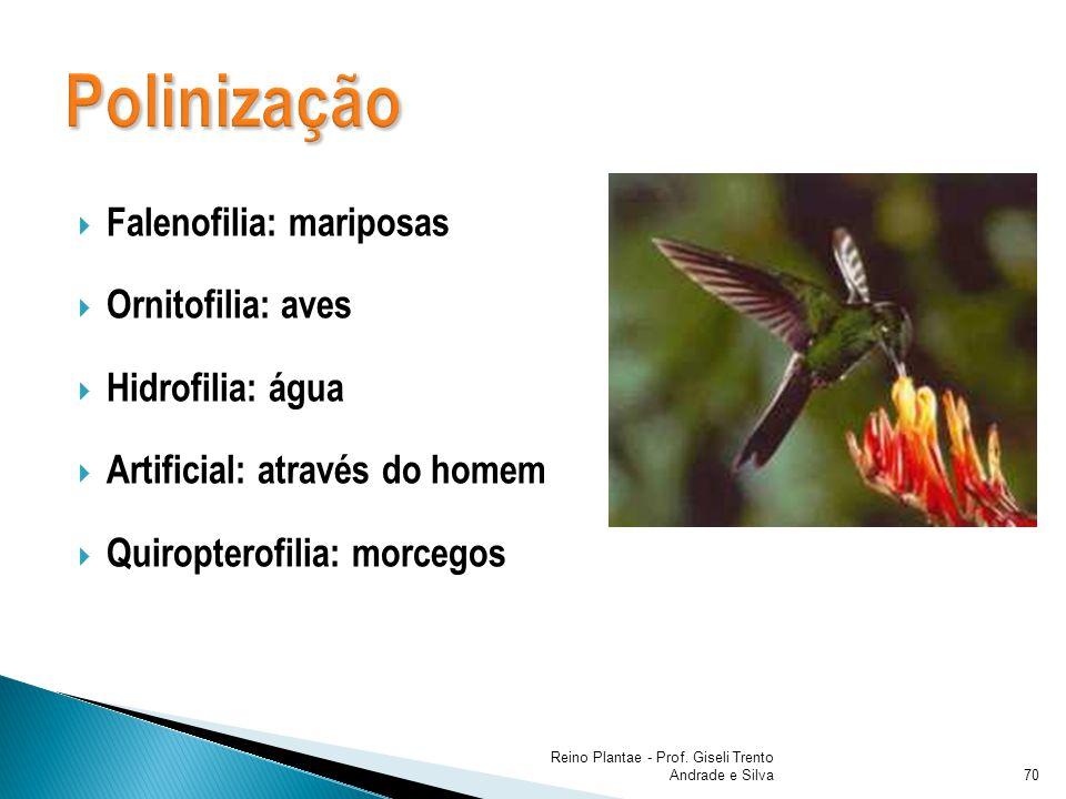 Falenofilia: mariposas Ornitofilia: aves Hidrofilia: água Artificial: através do homem Quiropterofilia: morcegos Reino Plantae - Prof. Giseli Trento A