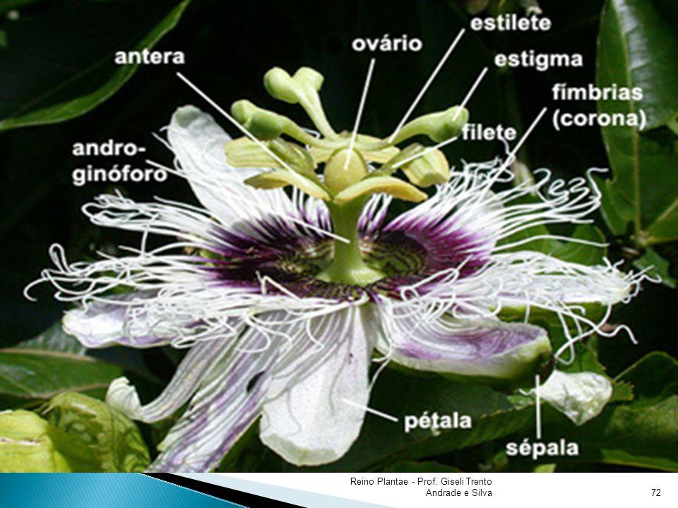 Reino Plantae - Prof. Giseli Trento Andrade e Silva72