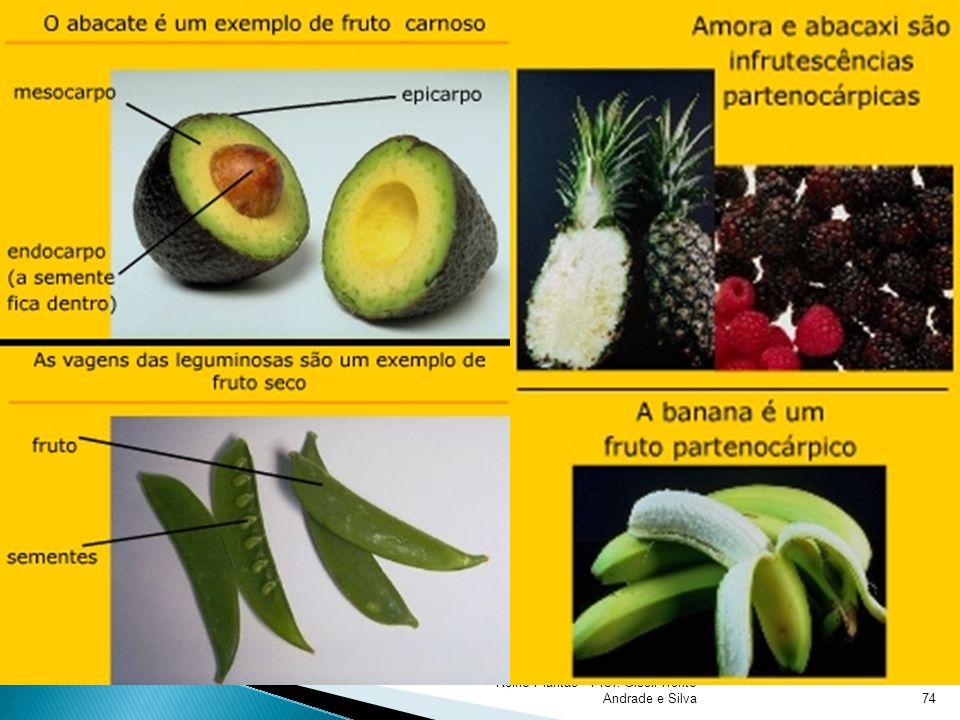 Reino Plantae - Prof. Giseli Trento Andrade e Silva74