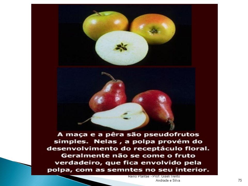 Nutre e protege o embrião; Resultado da união do gameta masculino e feminino; Composta por: Embrião; Endosperma; Tegumento; Reino Plantae - Prof.