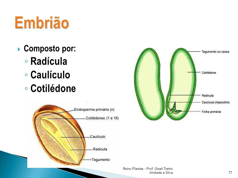 Composto por: Radícula Caulículo Cotilédone Reino Plantae - Prof. Giseli Trento Andrade e Silva77