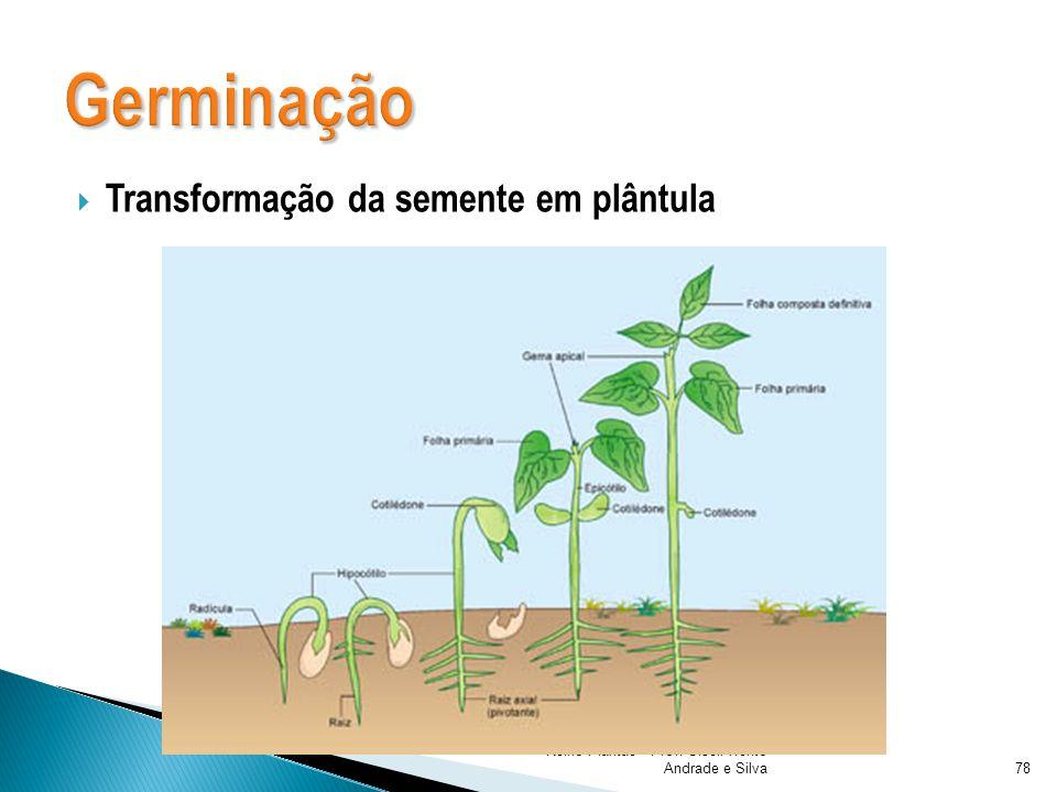 Reino Plantae - Prof. Giseli Trento Andrade e Silva79