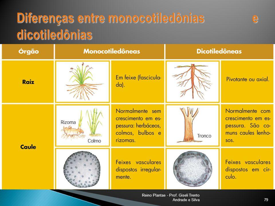 Reino Plantae - Prof. Giseli Trento Andrade e Silva80
