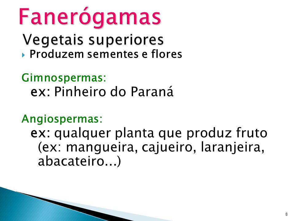 Produzem sementes e flores Gimnospermas: ex: Pinheiro do Paraná Angiospermas: ex: qualquer planta que produz fruto (ex: mangueira, cajueiro, laranjeir