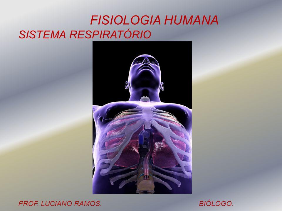 FISIOLOGIA HUMANA PROF. LUCIANO RAMOS.BIÓLOGO. SISTEMA RESPIRATÓRIO