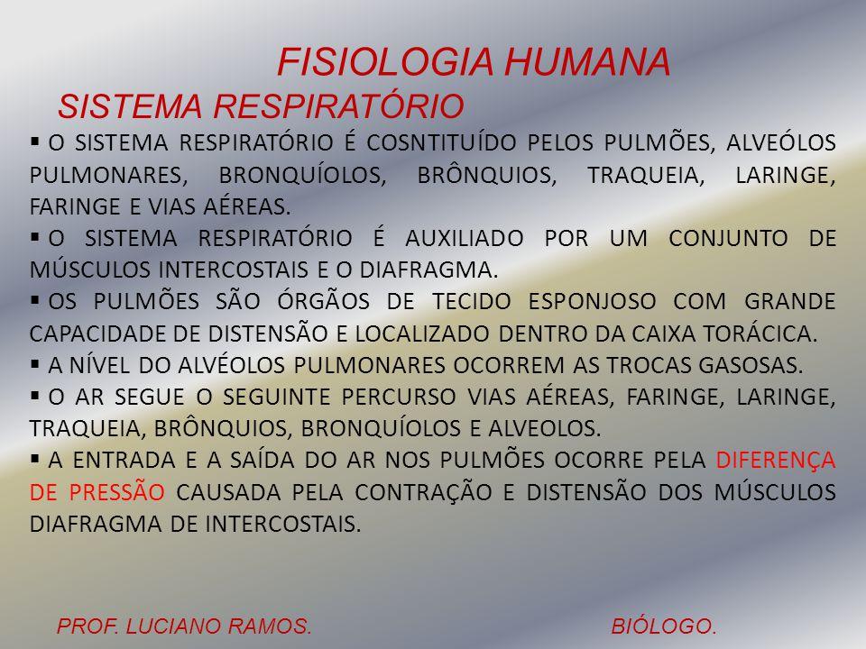 FISIOLOGIA HUMANA PROF. LUCIANO RAMOS.BIÓLOGO. SISTEMA RESPIRATÓRIO O SISTEMA RESPIRATÓRIO É COSNTITUÍDO PELOS PULMÕES, ALVEÓLOS PULMONARES, BRONQUÍOL
