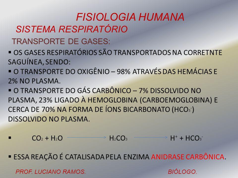 FISIOLOGIA HUMANA PROF. LUCIANO RAMOS.BIÓLOGO. SISTEMA RESPIRATÓRIO TRANSPORTE DE GASES: OS GASES RESPIRATÓRIOS SÃO TRANSPORTADOS NA CORRETNTE SAGUÍNE