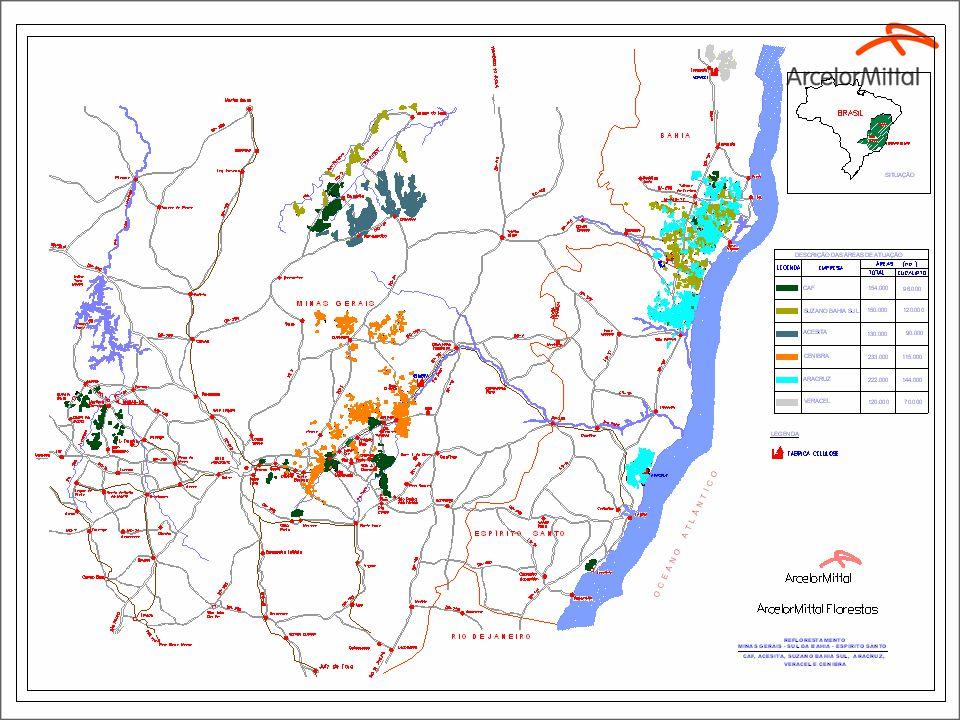 10 Visão: Empresa referência no setor florestal brasileiro.