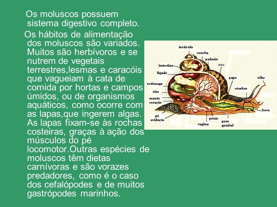 Os moluscos possuem sistema digestivo completo. Os hábitos de alimentação dos moluscos são variados. Muitos são herbívoros e se nutrem de vegetais ter