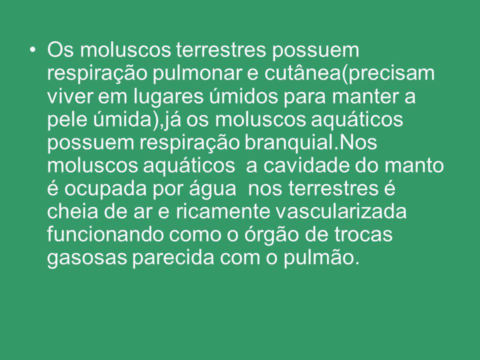 Os moluscos terrestres possuem respiração pulmonar e cutânea(precisam viver em lugares úmidos para manter a pele úmida),já os moluscos aquáticos possu