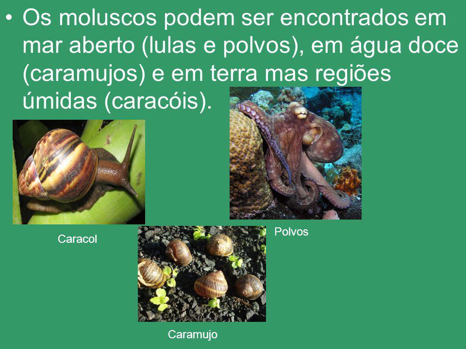 Os moluscos podem ser encontrados em mar aberto (lulas e polvos), em água doce (caramujos) e em terra mas regiões úmidas (caracóis). Polvos Caracol Ca