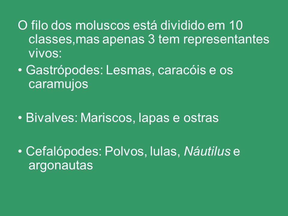 O filo dos moluscos está dividido em 10 classes,mas apenas 3 tem representantes vivos: Gastrópodes: Lesmas, caracóis e os caramujos Bivalves: Mariscos