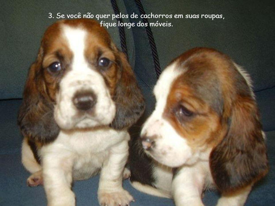 3. Se você não quer pelos de cachorros em suas roupas, fique longe dos móveis.