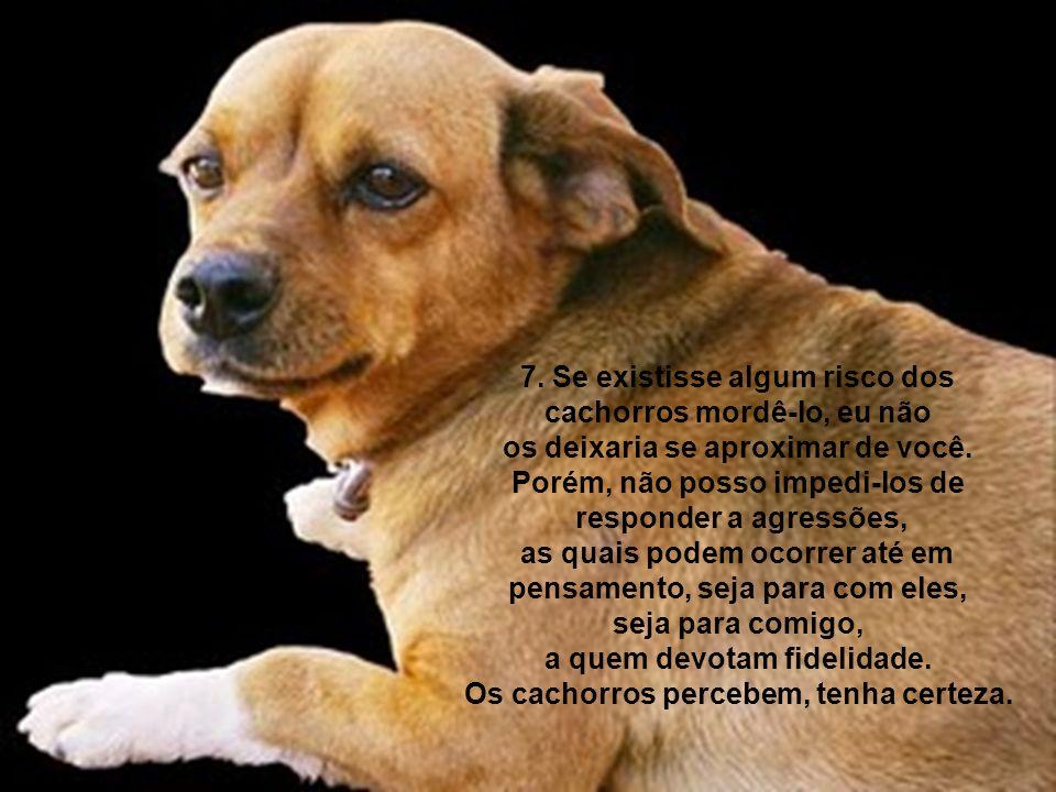 7. Se existisse algum risco dos cachorros mordê-lo, eu não os deixaria se aproximar de você. Porém, não posso impedi-los de responder a agressões, as