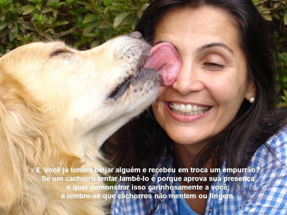8. Você já tentou beijar alguém e recebeu em troca um empurrão? Se um cachorro tentar lambê-lo é porque aprova sua presença e quer demonstrar isso car