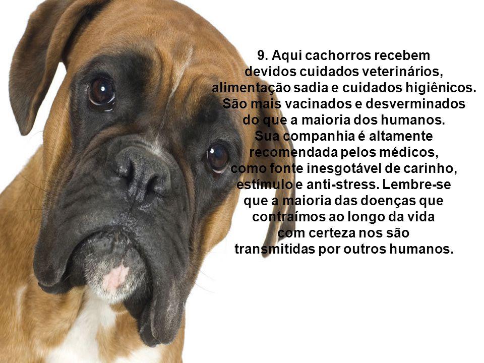 9. Aqui cachorros recebem devidos cuidados veterinários, alimentação sadia e cuidados higiênicos. São mais vacinados e desverminados do que a maioria