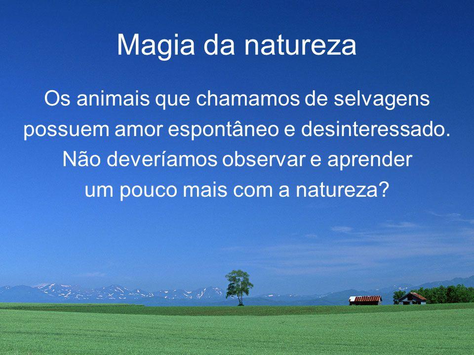 Magia da natureza Os animais que chamamos de selvagens possuem amor espontâneo e desinteressado.