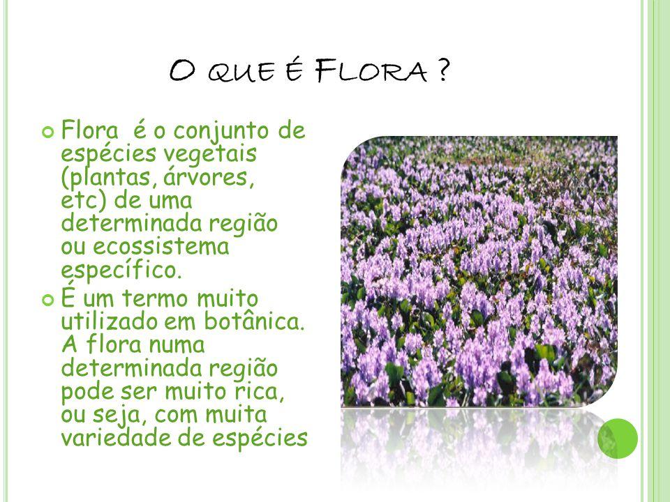 O QUE É F LORA ? Flora é o conjunto de espécies vegetais (plantas, árvores, etc) de uma determinada região ou ecossistema específico. É um termo muito