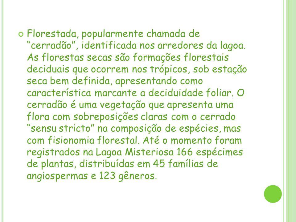Quanto à riqueza de espécies, a Savana Florestada apresentou os maiores valores, totalizando 119 espécies registradas, enquanto a floresta estacional decidual apresentou 82 espécies.