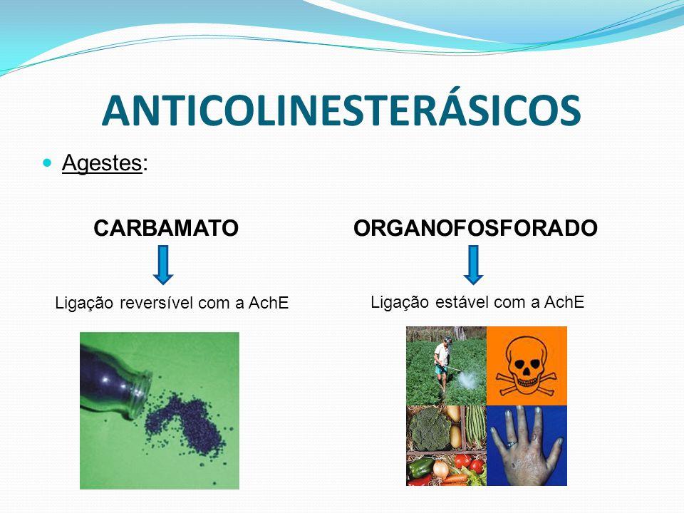 ANTICOLINESTERÁSICOS Agestes: CARBAMATO ORGANOFOSFORADO Ligação reversível com a AchE Ligação estável com a AchE