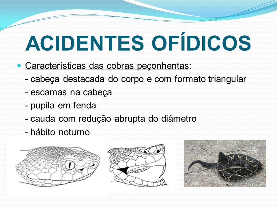 ACIDENTES OFÍDICOS Características das cobras peçonhentas: - cabeça destacada do corpo e com formato triangular - escamas na cabeça - pupila em fenda - cauda com redução abrupta do diâmetro - hábito noturno