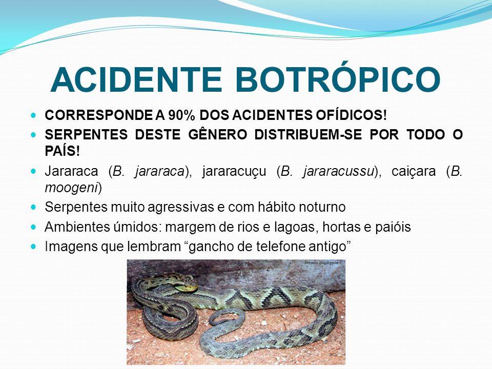 ACIDENTE BOTRÓPICO CORRESPONDE A 90% DOS ACIDENTES OFÍDICOS.