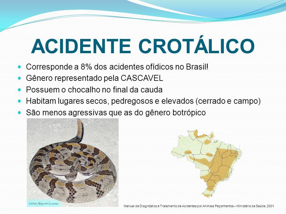 ACIDENTE CROTÁLICO Corresponde a 8% dos acidentes ofídicos no Brasil! Gênero representado pela CASCAVEL Possuem o chocalho no final da cauda Habitam l