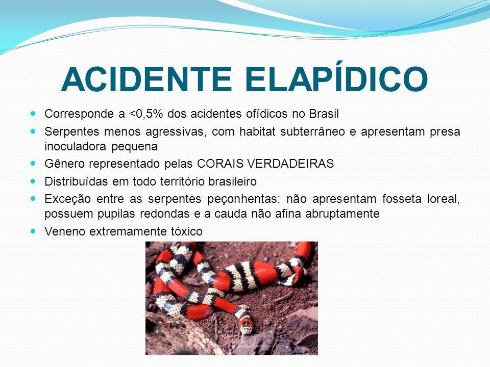 ACIDENTE ELAPÍDICO Corresponde a <0,5% dos acidentes ofídicos no Brasil Serpentes menos agressivas, com habitat subterrâneo e apresentam presa inoculadora pequena Gênero representado pelas CORAIS VERDADEIRAS Distribuídas em todo território brasileiro Exceção entre as serpentes peçonhentas: não apresentam fosseta loreal, possuem pupilas redondas e a cauda não afina abruptamente Veneno extremamente tóxico
